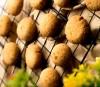 Australian Coconut Cookies [250 Gram]